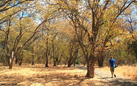 Walking through the forest that borders the mighty Zambezi